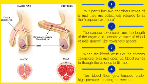 improve blood flow to the penis jpg 1152x768